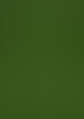 8796 水藻绿
