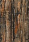 3474 石化木